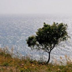 Chemins de traverse – 472 / René Char