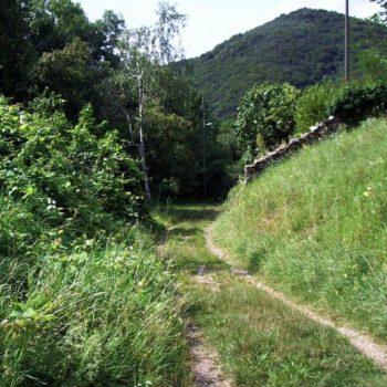 Chemins de traverse – 784 / Robert Frost
