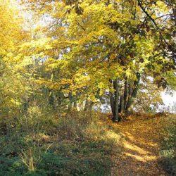 Chemins de traverse – 796 / Maurice Genevoix
